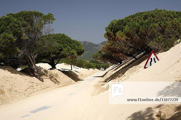 Straße führt durch Wanderdüne  Duna de Bolonia  Verkehrszeichen im Sand  Distrikt Cadiz  Spanien  Europa