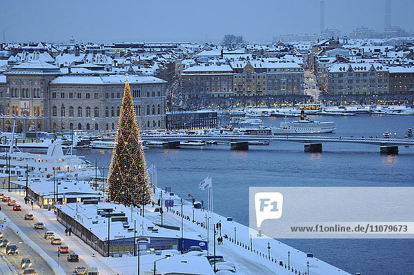 View of cityscape with Christmas tree