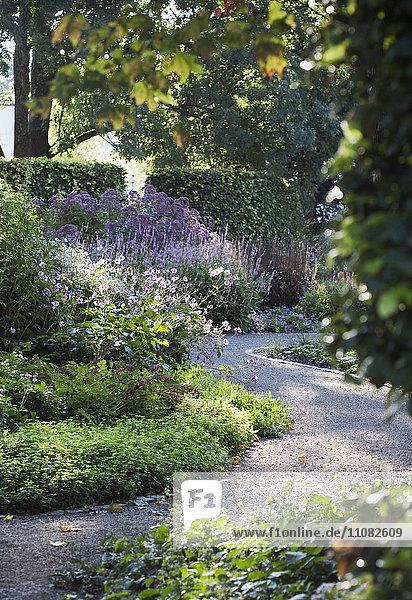 Path through garden