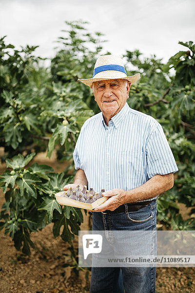 Portrait of senior man with harvested figs