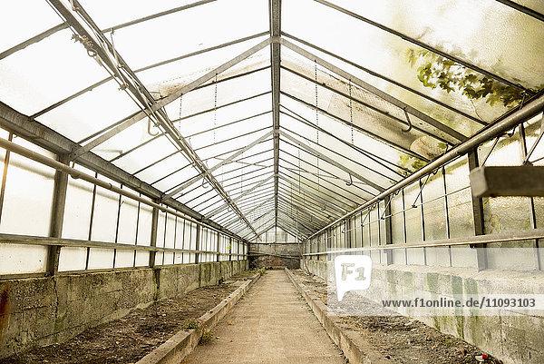 Interior of abandoned greenhouse  Munich  Bavaria  Germany