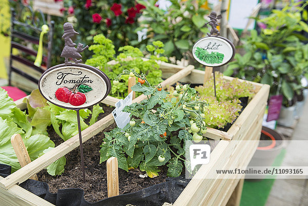 Vegetables growing in greenhouse  Augsburg  Bavaria  Germany Vegetables growing in greenhouse, Augsburg, Bavaria, Germany