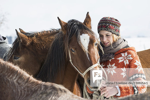 Young woman standing with horse in the farm  Bavaria  Germany Young woman standing with horse in the farm, Bavaria, Germany