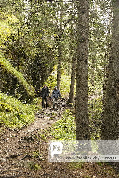 Two mature hikers walking in forest  Austrian Alps  Carinthia  Austria