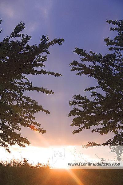 Sun Rising Over Field