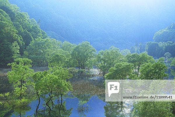 Lake Hosen and Trees