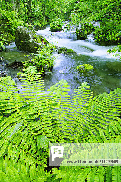 Fern and OIrase river