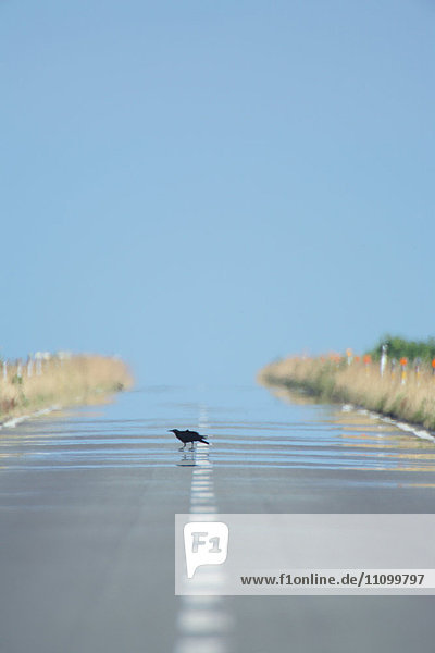 Bird on a road