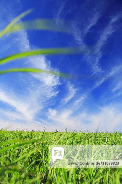 Grass fields