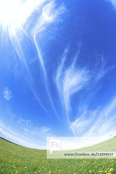 Meadow  Dandelion and sunbeam  Hokkaido Prefecture  Japan