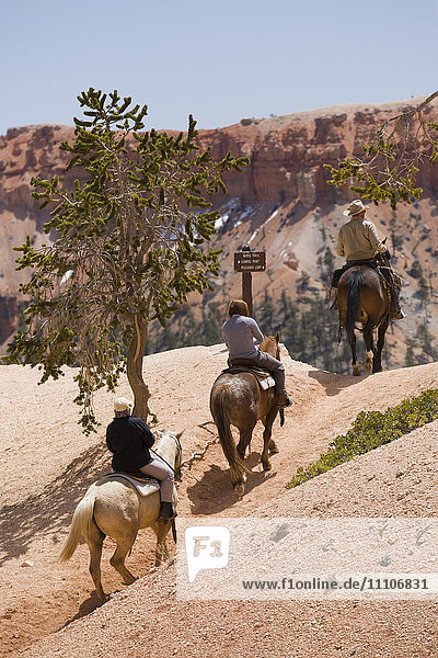 Horseback riding through Bryce Canyon National Park  Utah  United States of America  North America