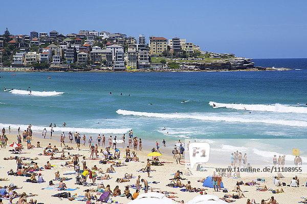 Bondi Beach  Sydney  New South Wales  Australia  Oceania