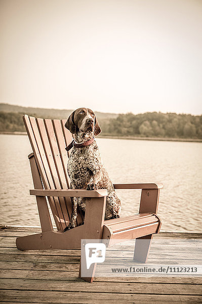 Dog sitting in chair on wooden dock
