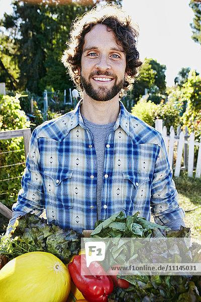 Caucasian man harvesting vegetables in garden Caucasian man harvesting vegetables in garden