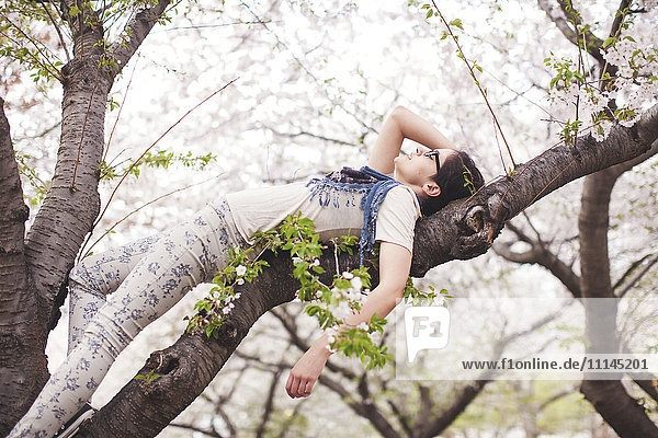 Caucasian woman laying in tree