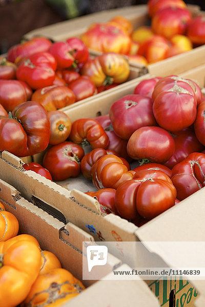 Crates of varieties of fresh tomatoes