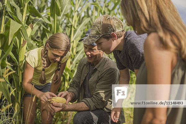 Caucasian family examining corn crops on farm
