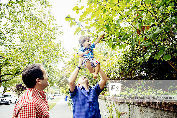 Father lifting baby son to tree branches