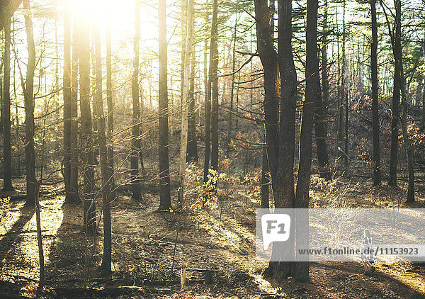 Caucasian woman walking in forest under sunny sky