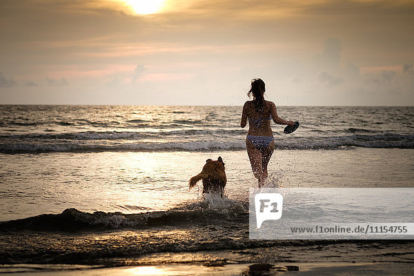 Mexico  Nayarit  Young woman in bikini playing frisbee with her Golden Retriever dog at the beach  running into the ocean