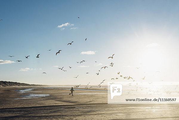 Dänemark  Blokhus  Junge jagt Möwenherde am Strand Dänemark, Blokhus, Junge jagt Möwenherde am Strand