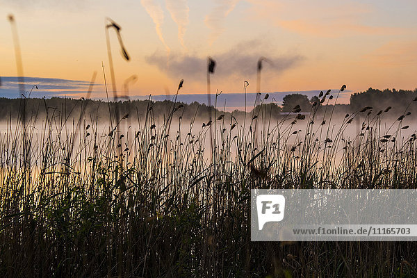 Silhouette of tall grass at foggy lake