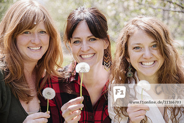 Three friends  women on a sunny day holding dandelion closk.