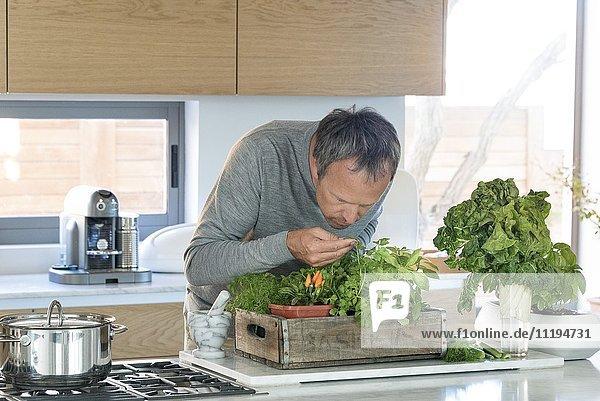 Reife Mann riechende Pflanze in der Küche