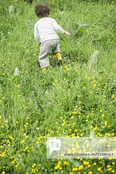 Kind läuft durchs Gras  Rückansicht Kind läuft durchs Gras, Rückansicht