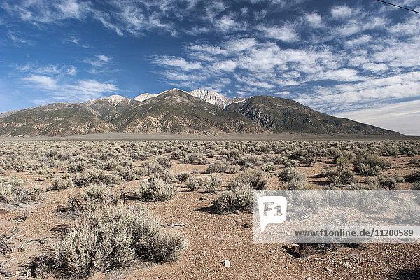 Wüste und Berge in Nevada  USA