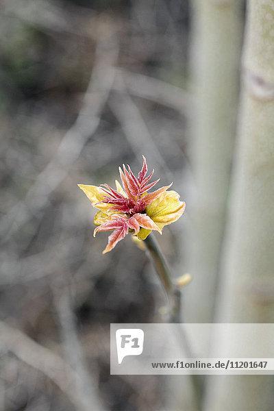 Direkt über dem Schuss einer Blume  die im Freien wächst.