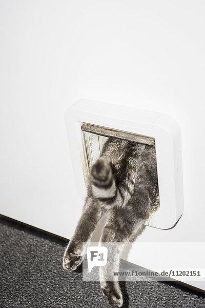 Unterer Teil der Katze  die von der weißen Tür eintritt Unterer Teil der Katze, die von der weißen Tür eintritt