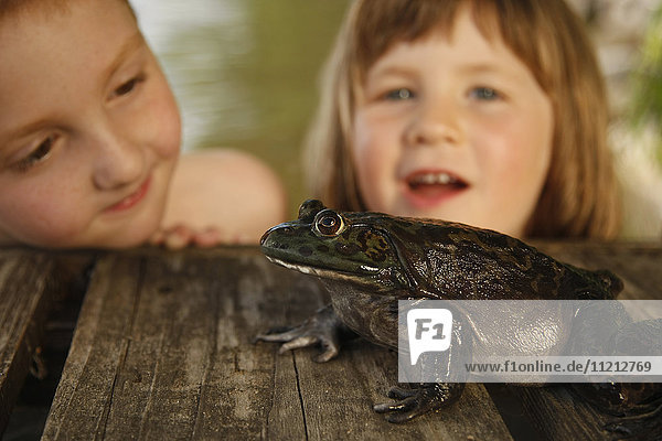 Young Boy And Girl Observe Large Bullfrog On The Dock on a Lake