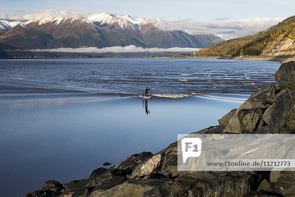 A paddleboarder rides a small bore tide in Turnagain Arm while a drone follows him to film  Southcentral Alaska  USA