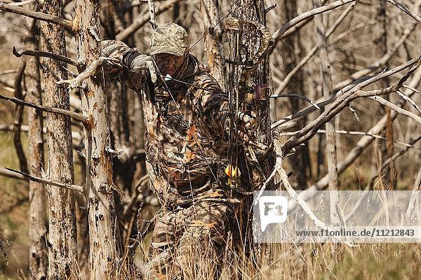 Bowhunter Aiming While Hunting Turkey