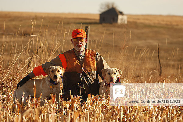Pheasant Hunter And Labs In Field