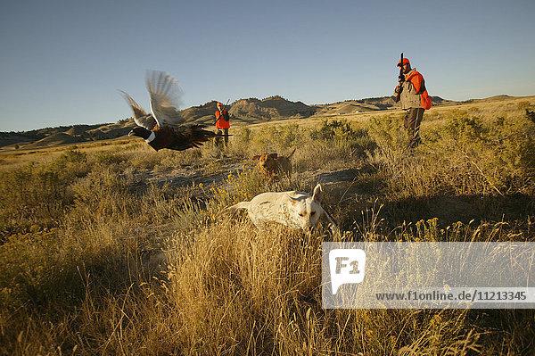 Upland Bird Hunters