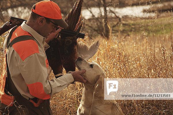 Hunter  Dog And Pheasant