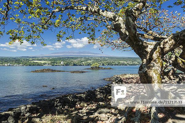 'Hilo Bay with Hilo and Mauna Kea in the distance; Hilo  Island of Hawaii  Hawaii  United States of America'
