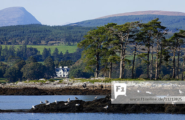 'Birds on the rock at the water's edge and a landscape of trees and hills on Kenmore Bay; County Kerry  Ireland '