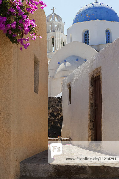 'Narrow street with a cat and a view of a church; Naxos  Greece'