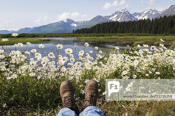 'Wild daisies colour the roadside near Mile 1 of Nash Road near Seward in south-central Alaska. This marsh is home to many nesting birds such as Trumpeter swans and ducks. The photographer positions his boots to show in the photo; Alaska  United States of America'