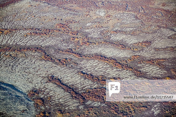 'Aerial view of strings of autumn coloured brush dotting the tundra  Yukon Delta  Arctic Alaska; Saint Mary's  Alaska  United States of America'