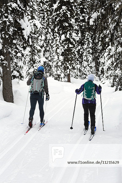 'Female cross country skiers on groomed trail with snow covered trees; Lake Louise  Alberta  Canada'