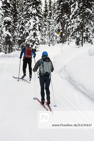 'Male and female cross country skiers along groomed trail with snow covered trees; Lake Louise  Alberta  Canada'