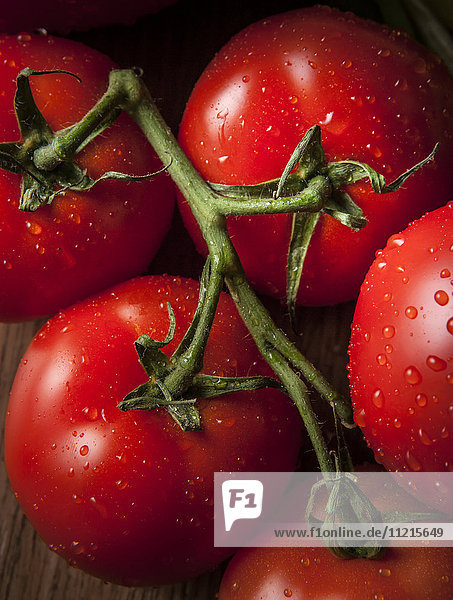 Close up of ripe  red tomatoes on the vine with water droplets