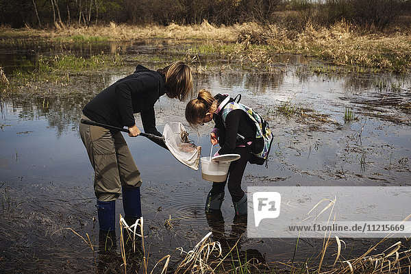'Mother and daughter in a pond with rubber boots  holding a pail and net for catching creatures in the water; Saskatchewan  Canada'