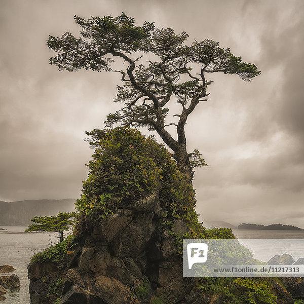 'A tree stands alone on a rocky hill top along the shores of Haida Gwaii; Haida Gwaii  British Columbia  Canada'