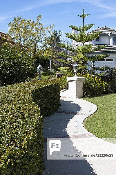 Curved hedge along curving sidewalk in lawn,  Laguna Beach,  California,  USA