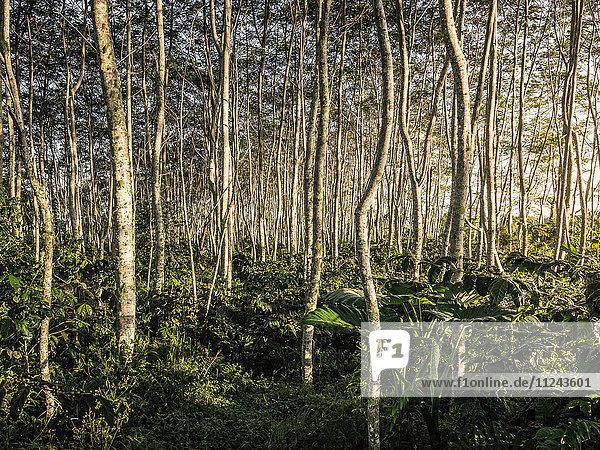 Forest view  Wana Giri  Bali  Indonesia